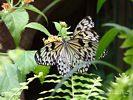 Two Butterflies Sharing a Flower Blossom
