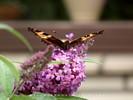Seeking Nectar