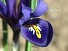 Seasons - Spring - Flowers - Iris