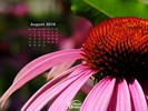 Nature - Flowers - Echinacea Close-up