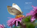 Animals - Wildlife Insects Butterflies - White Butterfly