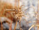 Seasons - Winter Weeds