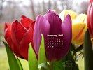 Seasons - Spring Flowers - Tulip