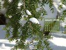 Season - Winter Wallpaper - Evergreen