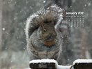 Seasons - Winter - Snow Storm - Snow Covered Grey Squirrel