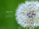 Nature - Flowers - Dandelion Seeds