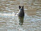 Animals - Wildlife - Birds Waterfowl - Dining In