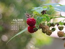 Foods - Fruit - Rasberries