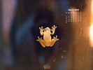 Animals - Wildlife - Frog on Window