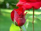 Happy Mother's Day - Red Rose