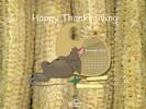 Holidays - Thanksgiving - Happy Thanksgiving