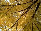 Seasons - Fall - Tree Crown
