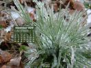 Nature - Ice Covered Grass