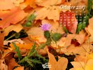 Seasons - Fall - Thistle growing in a bed of fallen leaves