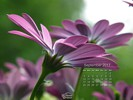 Nature - Flowers - Purple Daisy