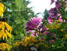 Nature - Flowers - Gardens - Abundance