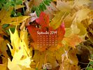 Seasons - Fall - Maple Leaf