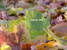 Seasons - Fall - The Last Green Leaf