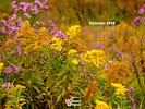 Nature Made - Flowers - Wildflowers - Autumn Flowers