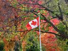 Canadian Flag in Autumn