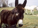 Curious Donkey