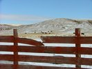 Cattle - Alberta Ranch in Winter