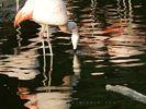 A Field of White Flamingos - Hamburg Zoo - Hamburg - Germany
