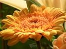 Orange Sun