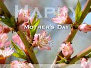 Happy Mothers Day - Peach Flowers