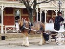 Horse Carriage, Downtown