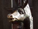 Donkey - Musicians of Bremen Monument (Partial) - Riga - Latvia