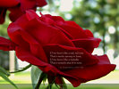 O, my luves like a red, red rose